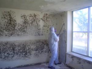 mold-suit